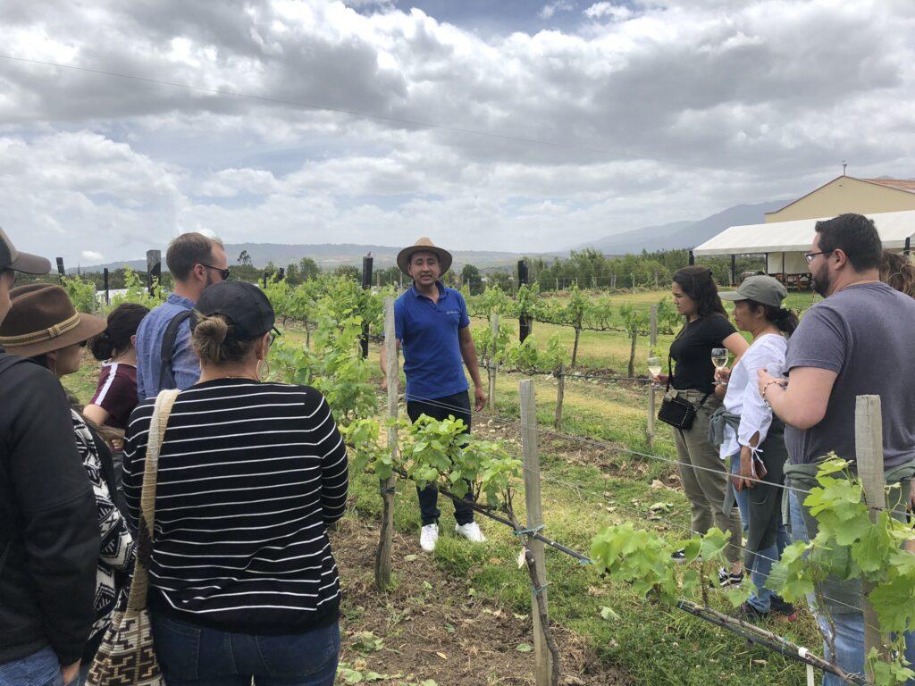wijngaard Marques Villa de Leyva in Colmombia