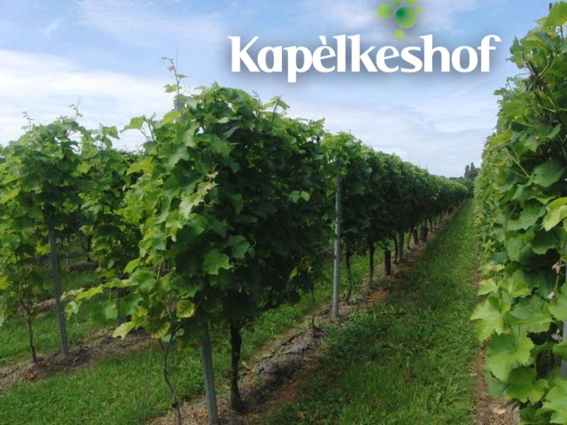 Wijndomein Kapelkeshof Grashoek