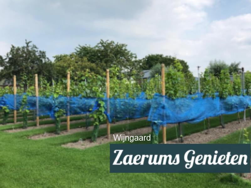 Wijngaard Zaerums Genieten Sevenum